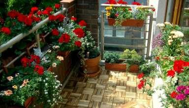 Cum creezi o gradina in propriul balcon
