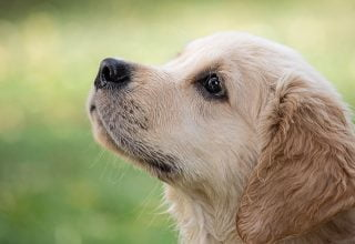 Cum să alegi o hrană de bună calitate pentru câini